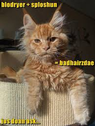 Bad Hair Day Meme - lolcats bad hair day lol at funny cat memes funny cat
