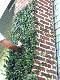 99 best gardening wall images on pinterest plants gardening and