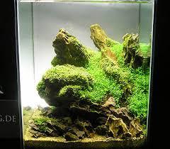 Nano Aquascaping Ohko Stone The Planted Tank Forum