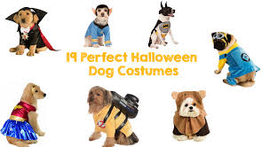 star trek halloween mask 19 perfect halloween dog costumes walyou