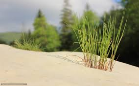 imagenes zen gratis descargar gratis piedras hierba minimalismo zen fondos de