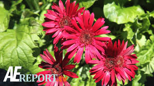 family garden center a u0026e wharton u0027s garden center youtube