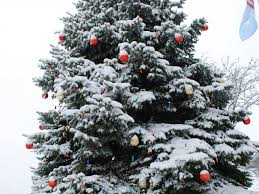 free christmas tree lights disposal in darien darien il patch