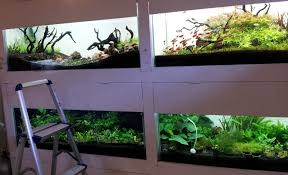 Aquascape Store Pic Heavy Thread Fish Shrimps And Aquascaping Thailand Uk
