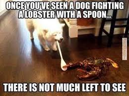 Best Memes 2014 - the 25 best best memes of 2014 ideas on pinterest dog shaming