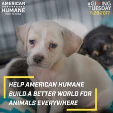 american humane home