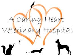 pet borading wichita falls tx caring heart veterinary hospital