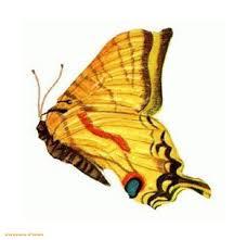 tattoopilot com butterfly designs tattoos