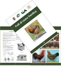 animali da cortile definizione bioozotec
