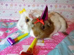 happy birthday we still remember by crafty lil vixen on deviantart