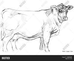cow cow sketch dairy cow pencil image u0026 photo bigstock