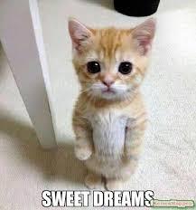 Sweet Dreams Meme - sweet dreams meme kitten timesheet 53490 memeshappen