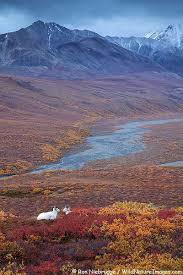 193 best alaska images alaska usa landscapes and