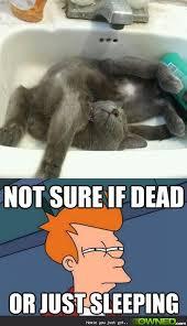 Sleeping Cat Meme - seizures in cats symptoms and treatments cat symptoms seizures
