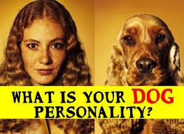 australian shepherd quiz quiz how well do you really know dogs u2013 iheartdogs com