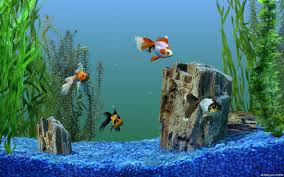 home design 3d free download for windows 7 aquarium live wallpaper free download for windows xp sim aquarium