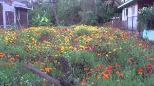 beautiful flower garden in mumbai far north virar vasai location
