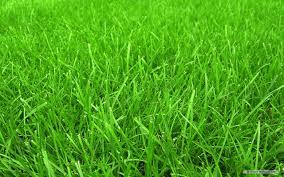 grass wallpaper grass cloth wallpaper grass paper wallpaper