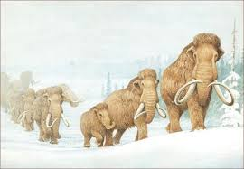 21 wooly mammoths images extinct animals ice