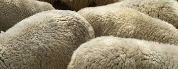 Lambskin Rugs What Benefits Do Rugs Made Of Sheepskin Offer For You