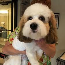zippity doo dog salon dog grooming home facebook