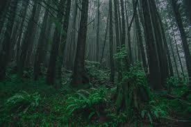 Oregon forest images Oregon forest copperfoto jpg