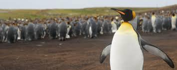 penguin awareness day at the falklandsci symposium u2013 national