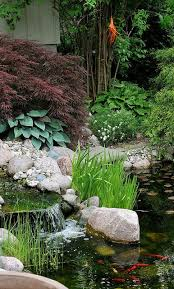 Backyard Bassin - 56 best bassin de jardin images on pinterest garden ideas