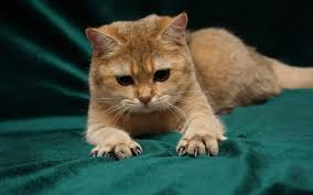 Grumpy Cat Photo 1 Best - super grumpy cats you really wouldn t want to stroke