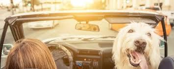 gerüche entfernen haushaltstipps schlechte gerüche aus dem auto entfernen