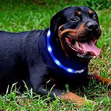 collar light for small dogs amazon com led dog collar laroo flashing led dog safety collar