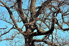 free photo tree branches aesthetic tree free image on