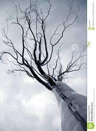 tree from iron stock photo image of iron grunge sunset 35872866