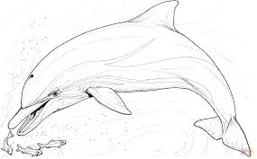 dolphin and several little fish coloring page free printable