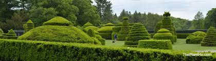 hidden hills garden garden shenanigans