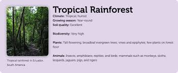 Adaptations Of Tropical Rainforest Plants - forests
