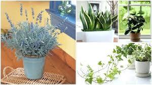 best plants for bedroom plants for bedroom oxygen pentium club