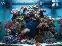 best 25 reef aquascaping ideas on reef aquarium