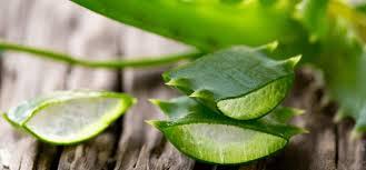 aloe vera gel or juice ke benefits fayde in hindi dr blog
