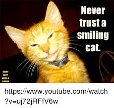 Smiling Cat Meme - angry needs a never trust a smiling cat httpswwwyoutubecomwatch v