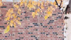 leaves changing color in autumn season with brick wall stock