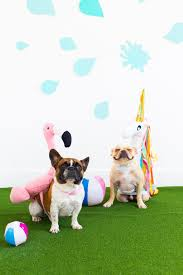 countdown to halloween calendar 21 delightful diy dog halloween costumes page 2 of 4 the