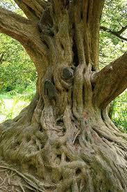 25 beautiful trees ideas on trees beautiful big
