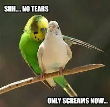 Meme Bird - bird rape meme by ashahos memedroid