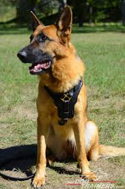belgian shepherd south africa german shepherd escape proof dog harness pet harness
