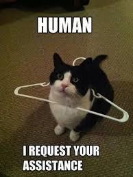 Talking Cat Meme - pin by pineapplecaticorn52 on funny animals pinterest talking