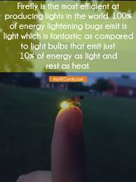 Light Energy Facts Firefly Is The Most Efficient At Producing Lights In The World
