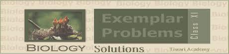 ncert exemplar problems class 11 biology in pdf form