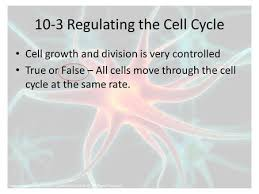 regulating the cell cycle ppt video online download