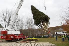 Cutting Christmas Tree - rockefeller center christmas tree cut heads to nyc ny daily news